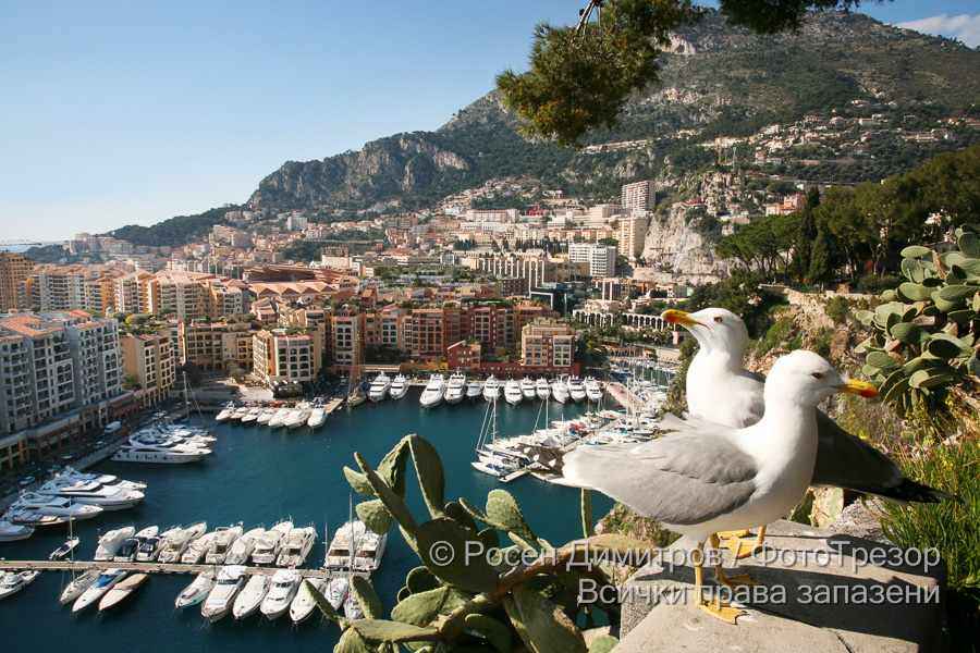 Монако: ФотоТрезор