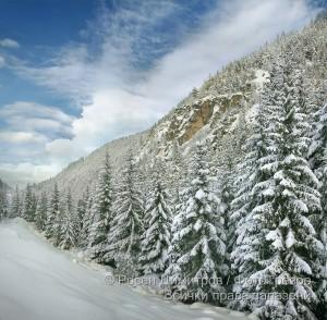 Борова гора по река Искър