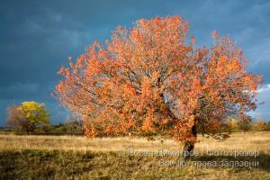 Есен край Старосел