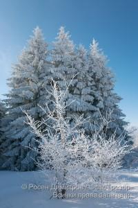 Зима край Копитото