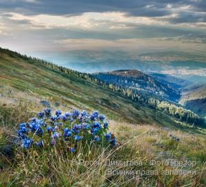 Поляни край връх Ком