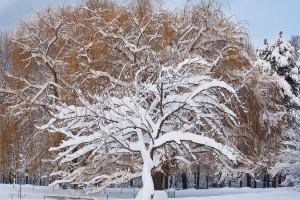 Южния парк през зимата