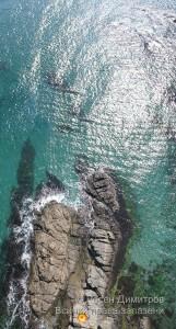 Залив Липите, резерват Силистар